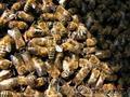 Пчелопакеты-2014
