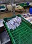 Работа на рыбном заводе СНГ